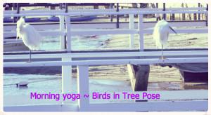 YogaBirdsinTreePose